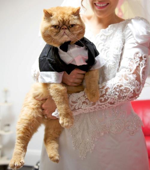 Wedding Cat