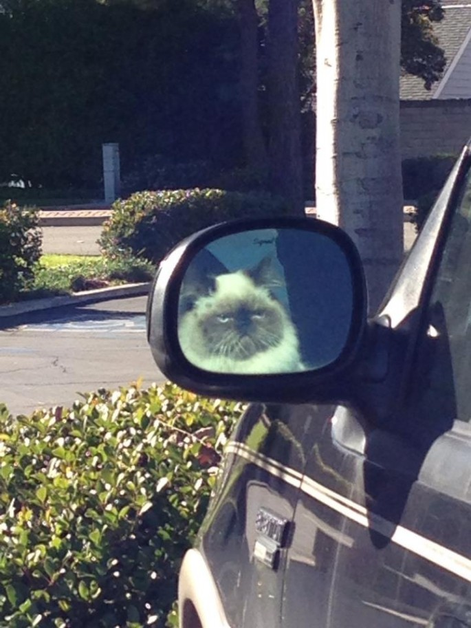 cat car problems