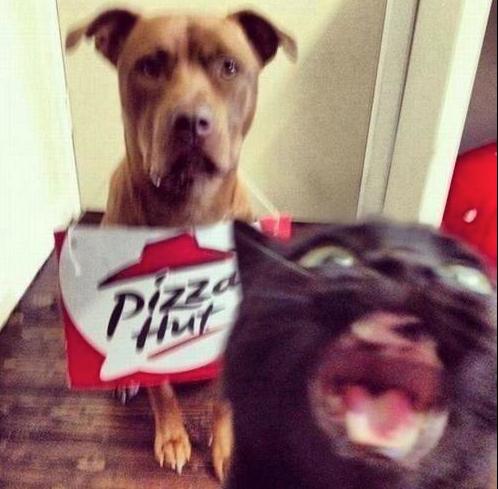 cat kidnaps dog