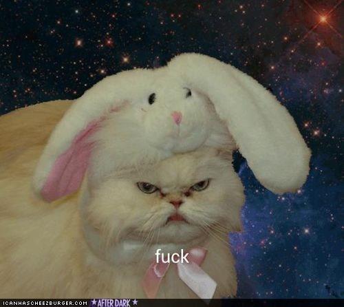 grumpy fuck costume cat