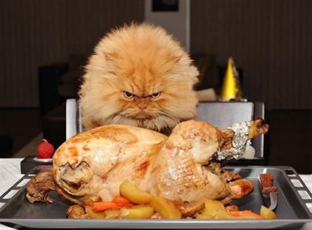 grumpy thanksgiving cat