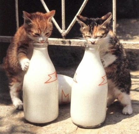 Milk Date
