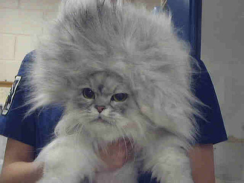 Purrm Cat