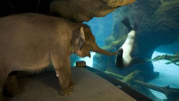elephant and sea lon