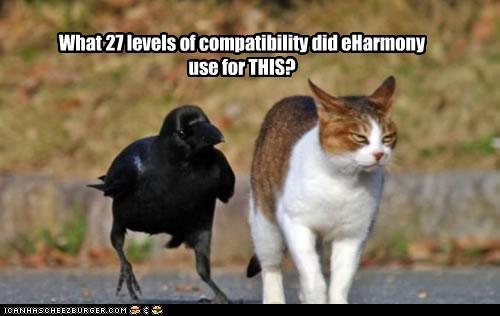 cat and bird blind date eharmoney
