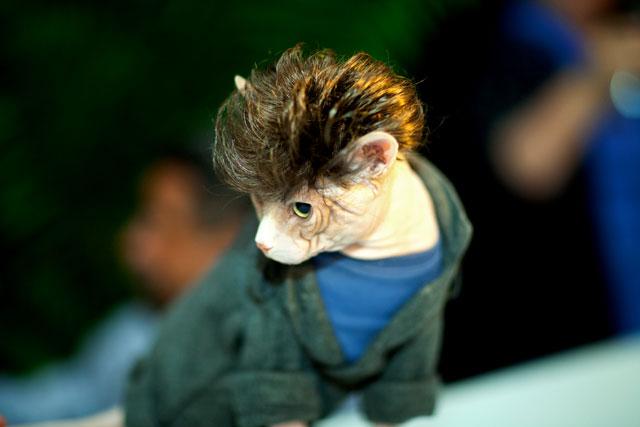 fashion victim cat