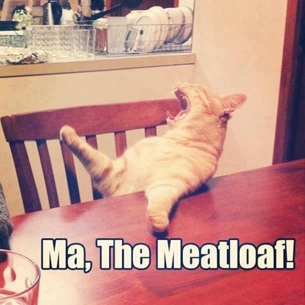 meatloaf cat