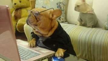 facebook dog worried about changes