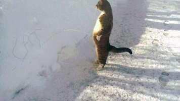 cat huh?