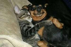 Who Says Cats and Dogs Can't Coexist?