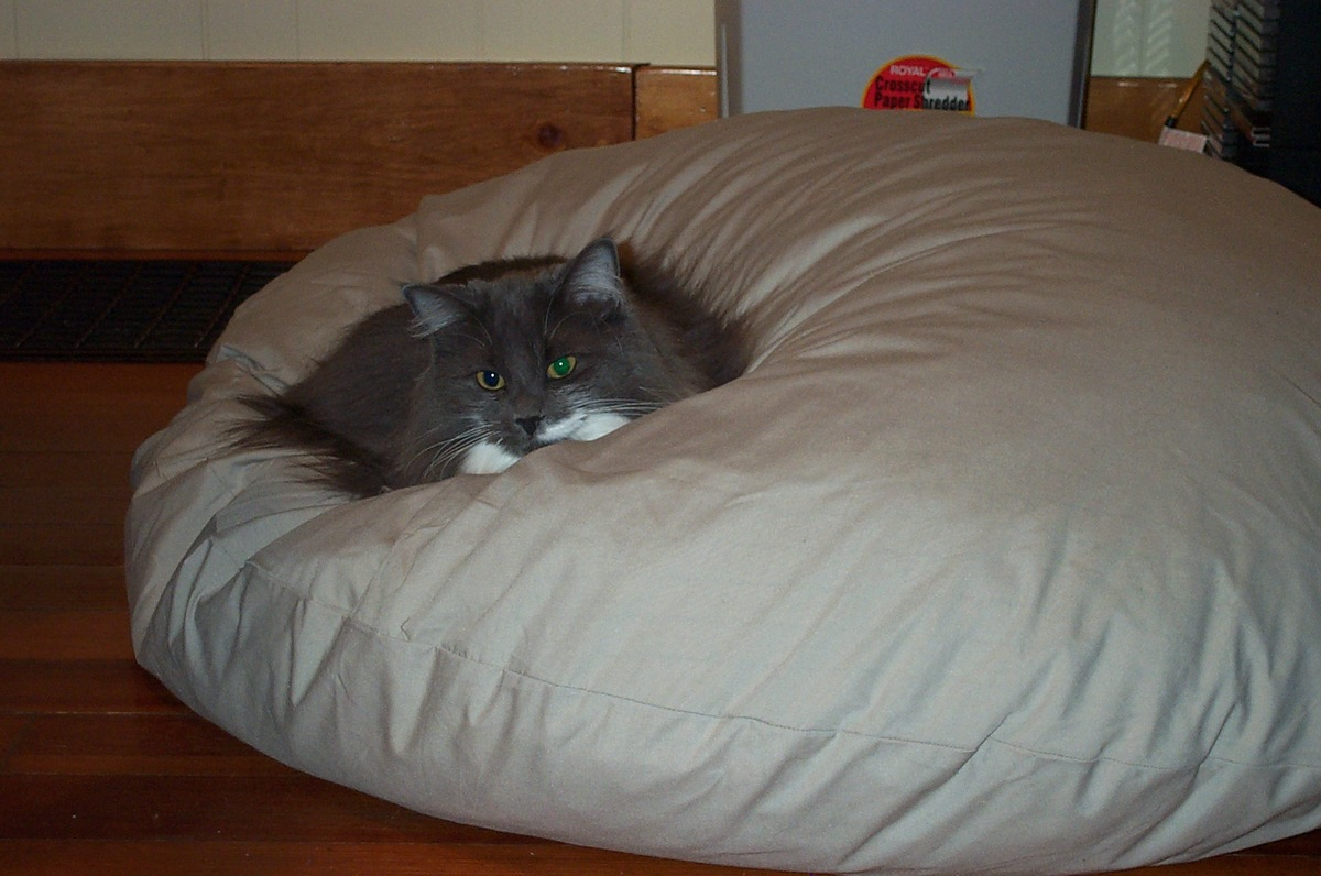 Cat asserts dominance