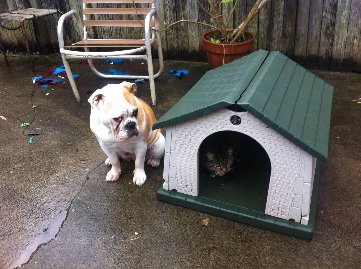 Saddest Bulldog ever