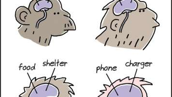 evolution of essentials