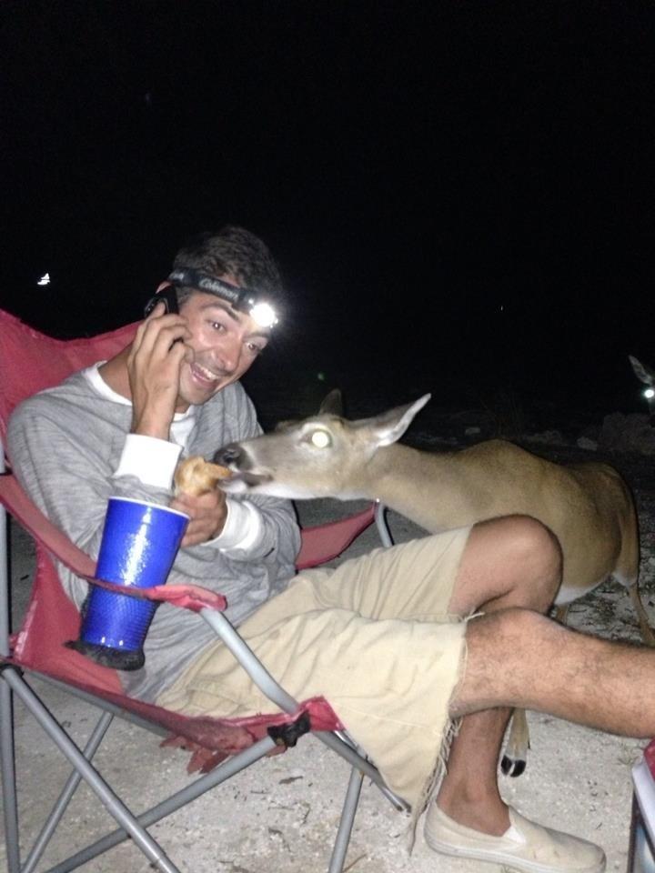 What kind of sandwich did you get me deer?