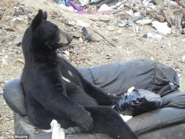 bearly living