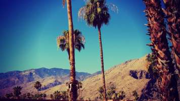 California Palms by Nachielly MG