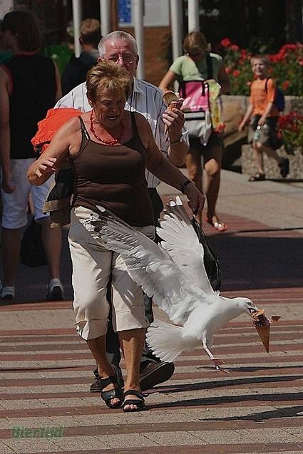 bird stealing ice cream
