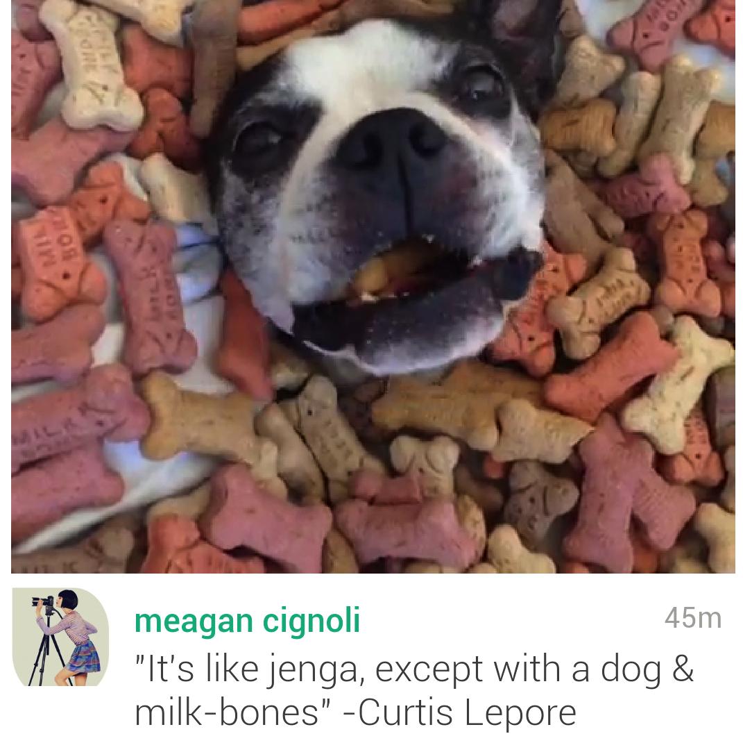 Screenshot of dog treats video on Vine