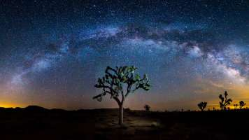 milky way above joshua tree