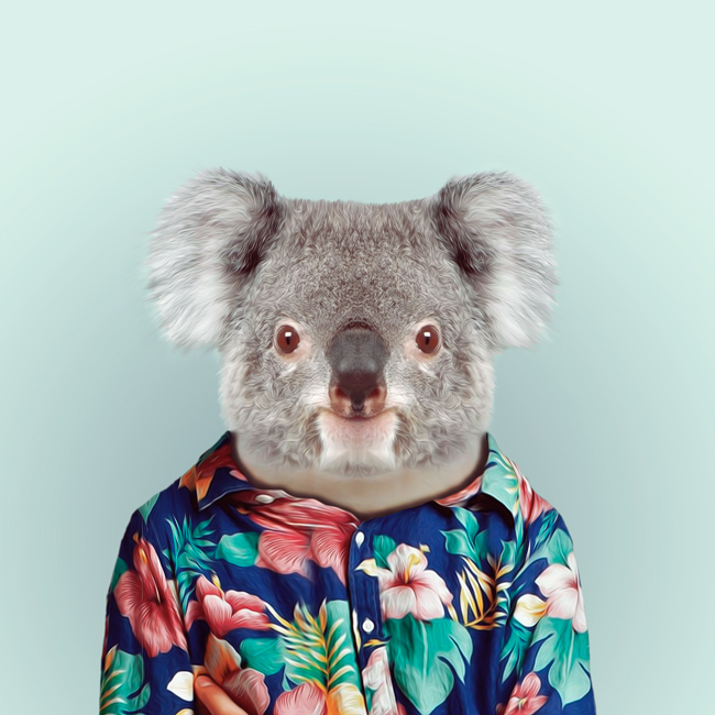 Quoala bear