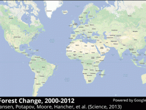 Global forest change map