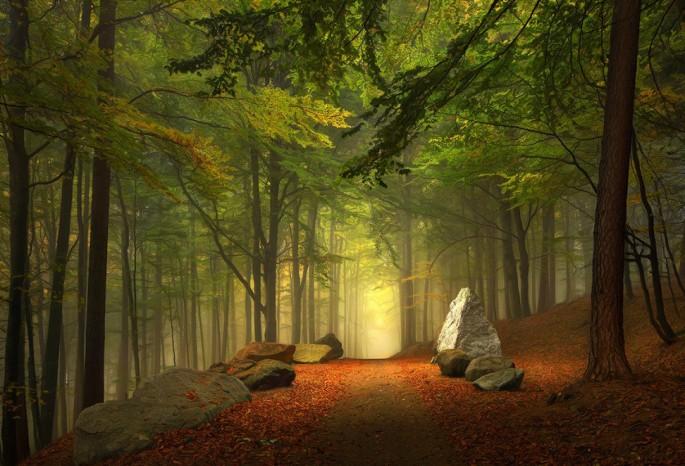 Kilian Schönberger forest photograph