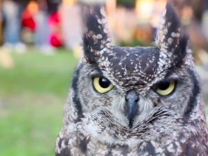 owls not drones
