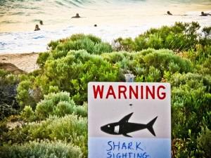 sharks tweets