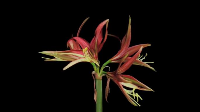 screencap of video timelapse of flowers blooming