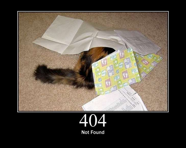 404 not found cat