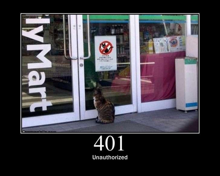 401 error cat