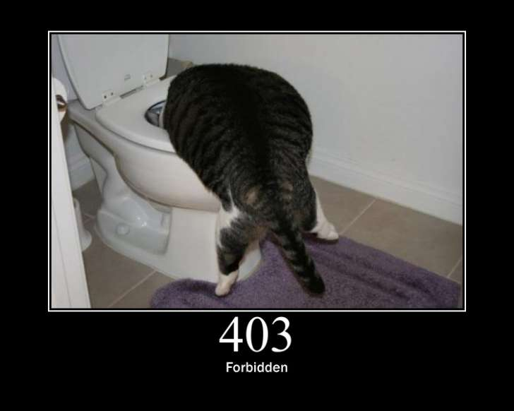 403 error cat