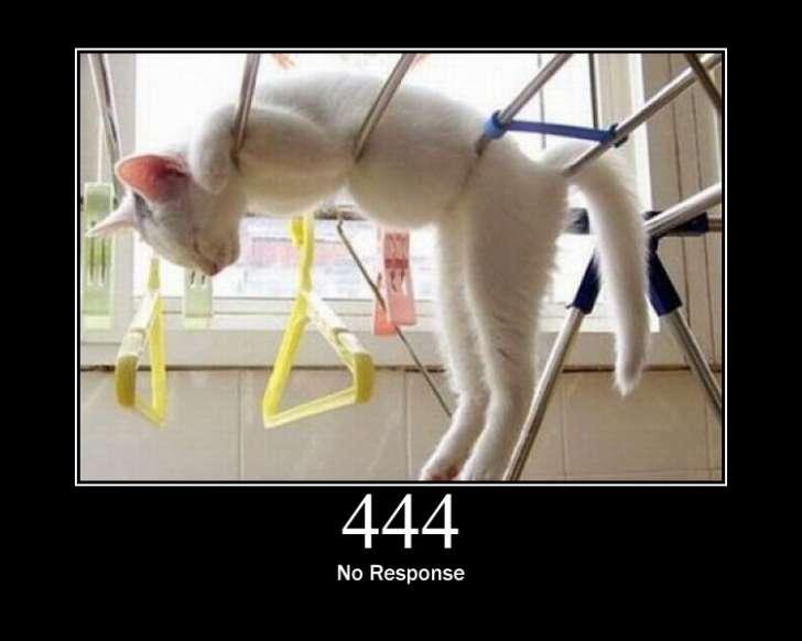 444 Error cat