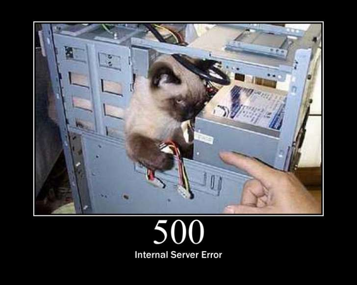 500 Internal Server Error cat
