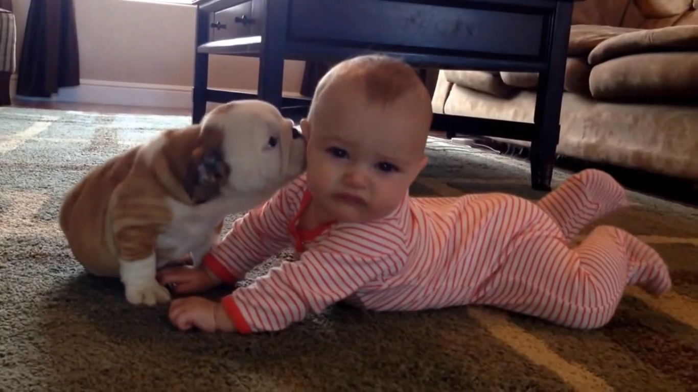 bulldog puppy can't stop kissing the baby