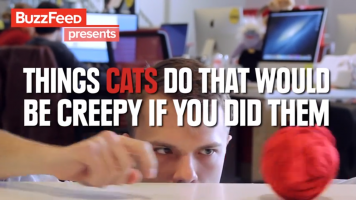 Things cats do that would be creepy if you did them