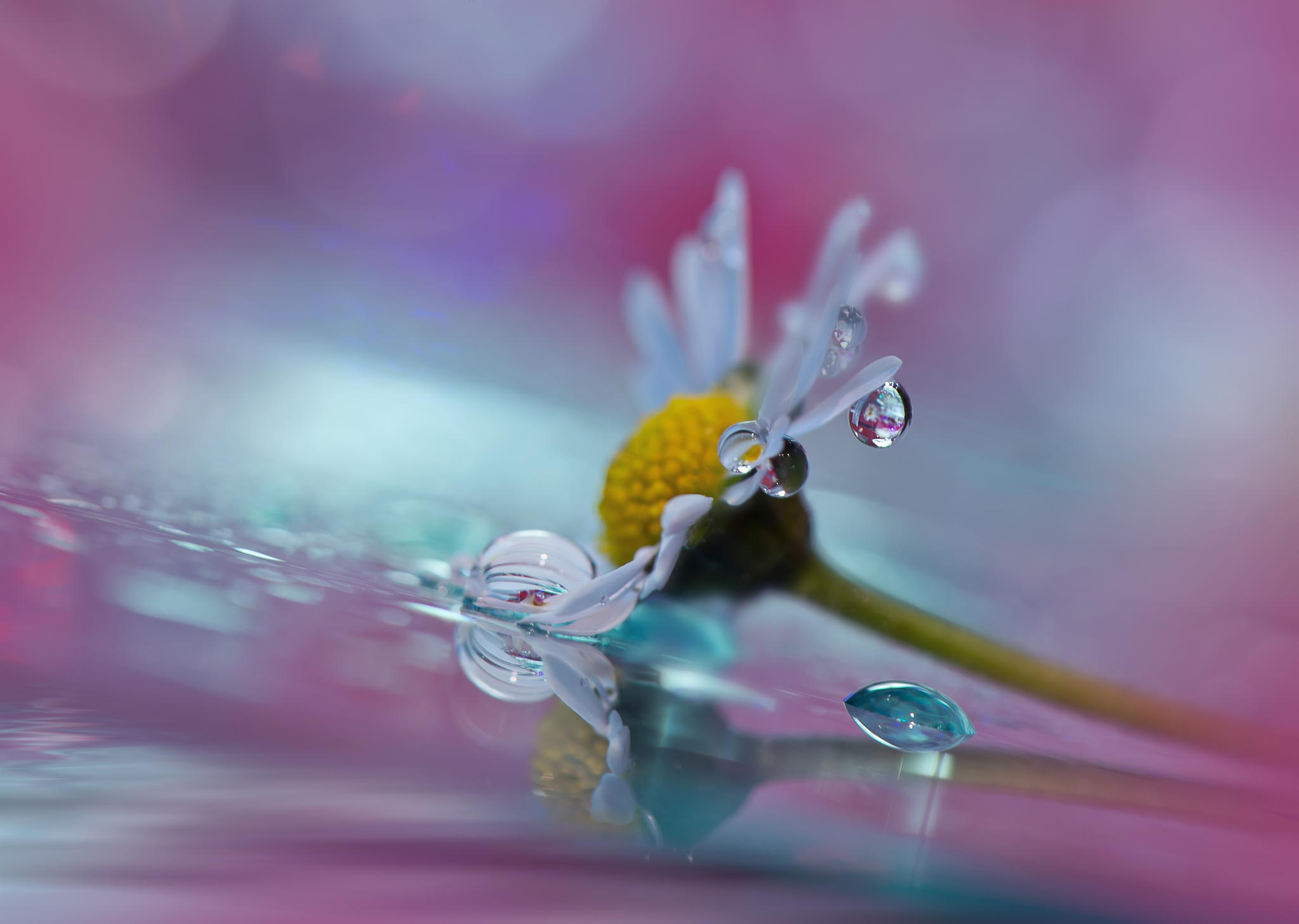 Water Drop On Flower Painting | www.imgkid.com - The Image ...