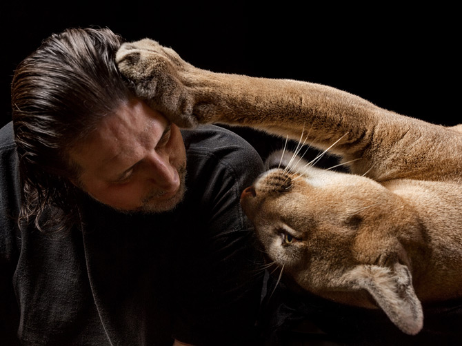 pet-cougar