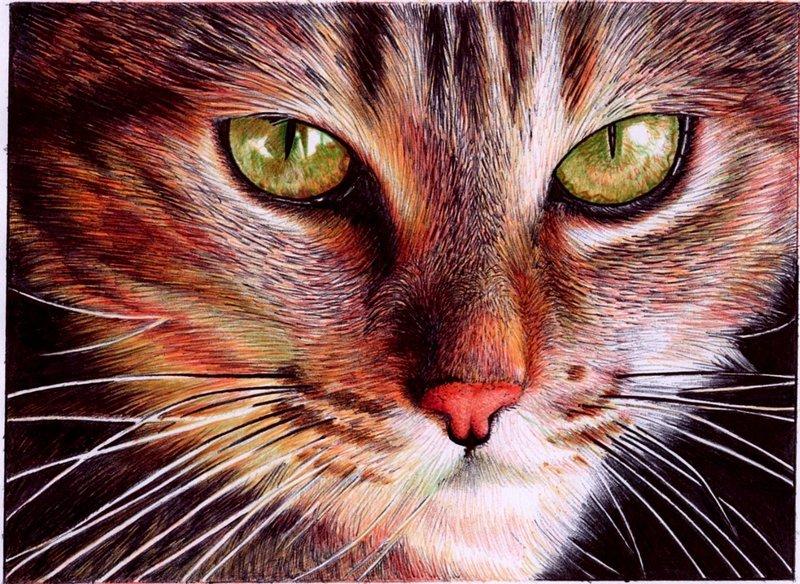 samuel silva vianaarts_cat face