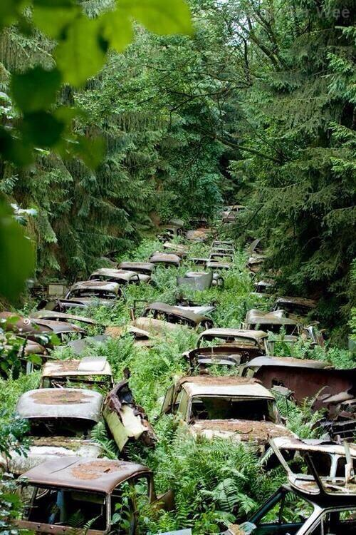 Abandoned WWII cars in the Ardennes