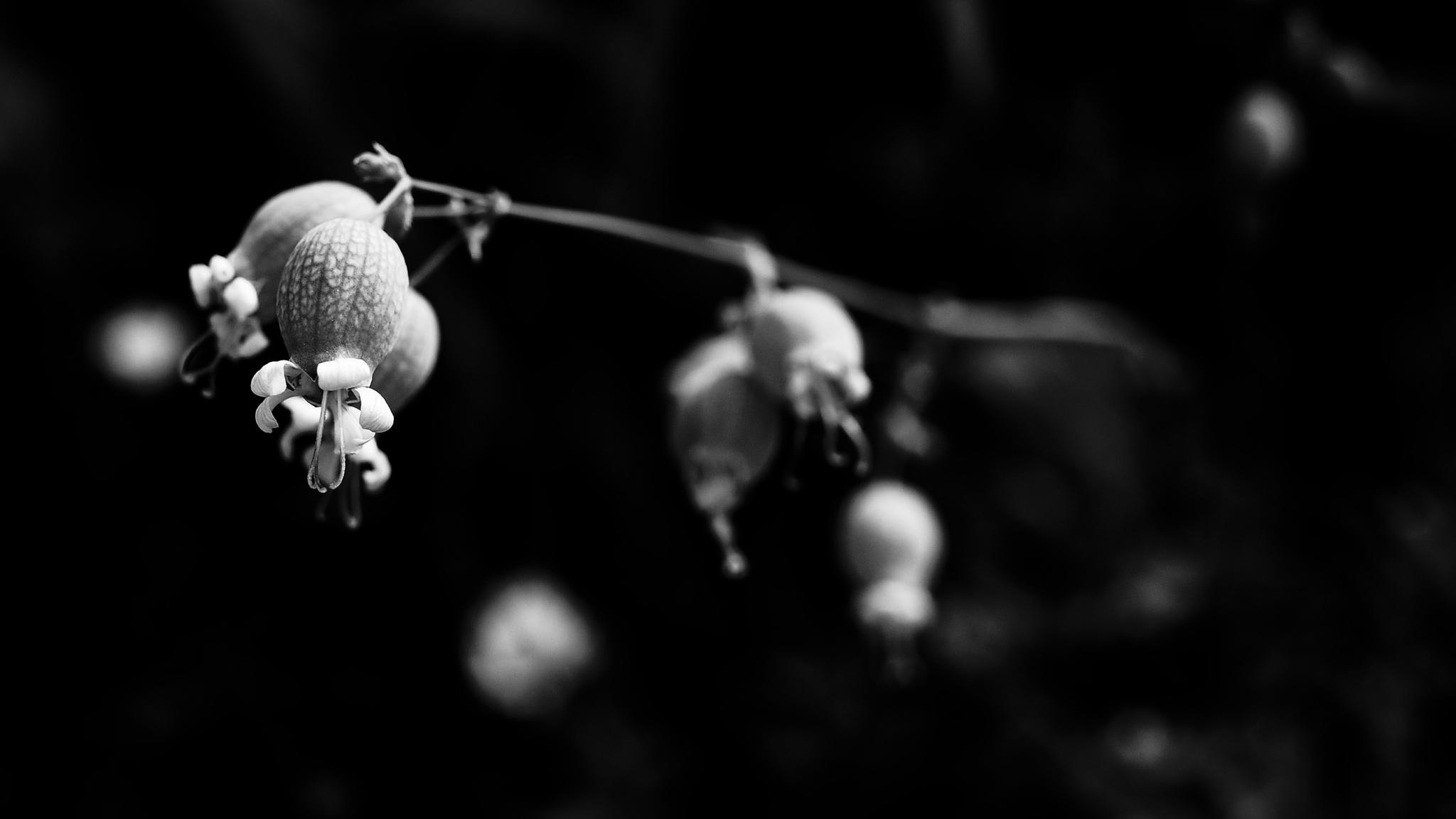 Black And White Flower Photography Black Amp White Flower 2