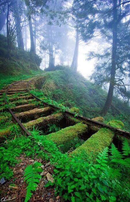abandoned Train Tracks, Japan